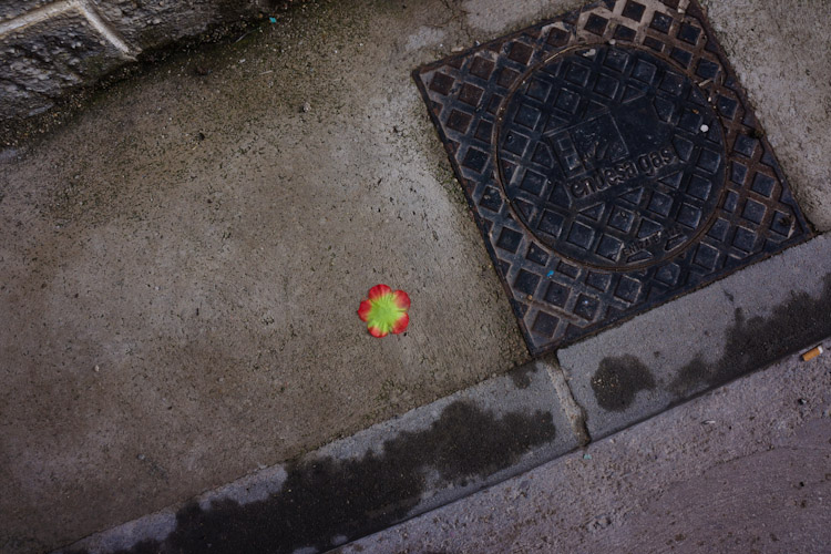 Piece of color among the concrete.