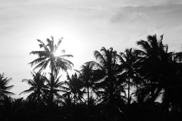 Palms trees for days in Bahia.