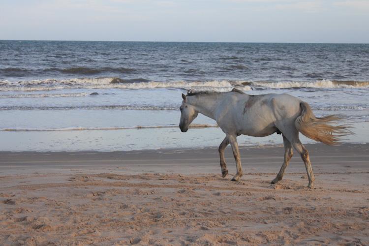 Horses on the beach in Bahia.