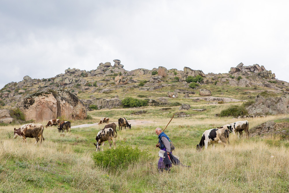 Sheep Herder Prilep, Macedonia.